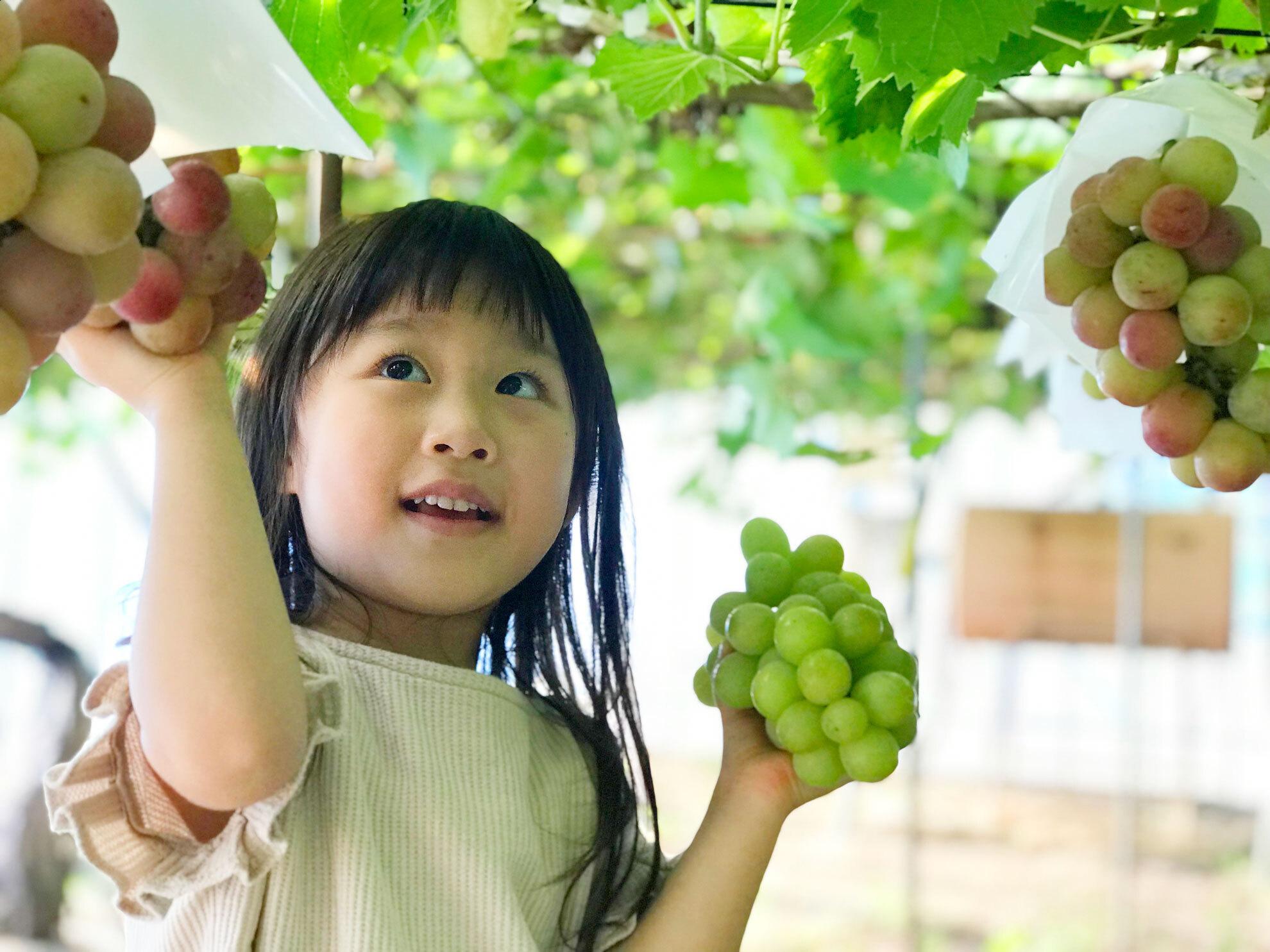 観光農園プレゼントキャンペーン10月1日(金)〜11月21日(日)