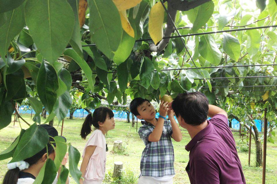 中村観光果樹園